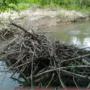 Pilotna izvedba ukrepa za znižanje vodne gladine za bobrovim jezom v bližini Novega mesta